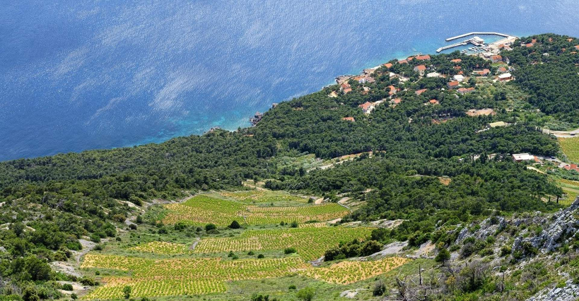 Hvar Island Wineries - A Touch of Class